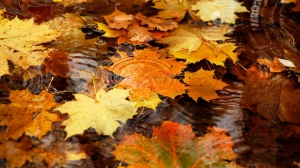 6877209-autumn-leaves